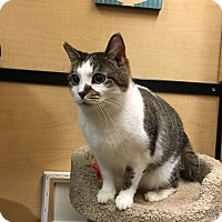 Adopt A Pet :: Sage - Riverside, CA