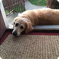 Adopt A Pet :: Summer - Bellingham, WA