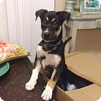 Adopt A Pet :: Monkey - Clearwater, FL