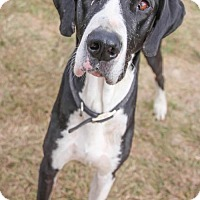 Adopt A Pet :: Batman - Austin, TX