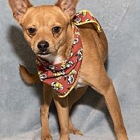 Adopt A Pet :: Aden - Mt. Prospect, IL