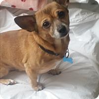 Adopt A Pet :: Corky - Grand Rapids, MI