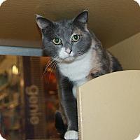 Adopt A Pet :: Martha - Rochester, MN