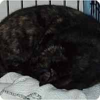 Adopt A Pet :: MaMA - Westfield, MA