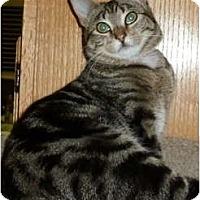 Adopt A Pet :: Chloe - Portland, OR