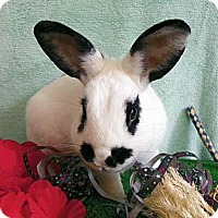 Adopt A Pet :: Snoopy - North Gower, ON