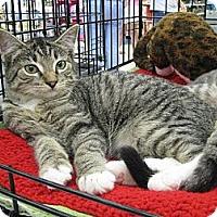 Adopt A Pet :: Freddy - Vero Beach, FL