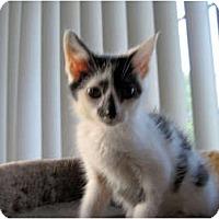 Adopt A Pet :: Erin - Catasauqua, PA