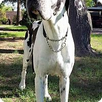 Adopt A Pet :: Atticus - Scottsdale, AZ