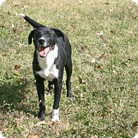 Adopt A Pet :: Skip - Lufkin, TX