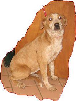 Collie/Collie Mix Puppy for adoption in Buchanan Dam, Texas - Hawkeye