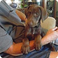 Adopt A Pet :: Puppies Boys! - Sacramento, CA