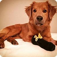 Adopt A Pet :: Uno - Austin, TX