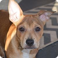 Adopt A Pet :: Ben - Plainfield, CT