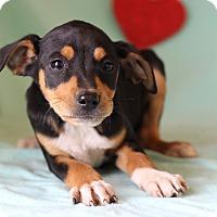 Adopt A Pet :: Jay - Waldorf, MD
