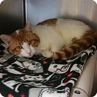 Adopt A Pet :: Maurice - Chippewa Falls, WI