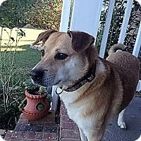 Adopt A Pet :: Mollie - Blue Ridge, GA