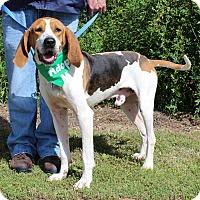 Adopt A Pet :: Bert - McCormick, SC