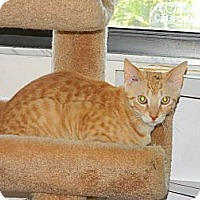 Adopt A Pet :: Spencer - Naples, FL