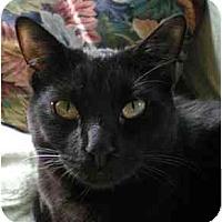 Adopt A Pet :: Oscar (BIG boy!) - Portland, OR