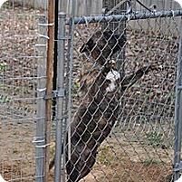 Adopt A Pet :: Fancy - Conyers, GA