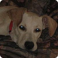 Adopt A Pet :: Kenzie - Golden Valley, AZ