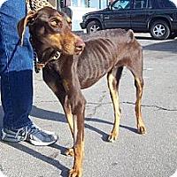 Adopt A Pet :: Koari--adopted!! - New Richmond, OH