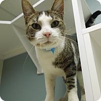 Adopt A Pet :: Jeffrey - Medina, OH