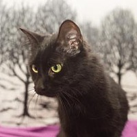 Adopt A Pet :: Abby - South Haven, MI