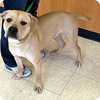 Adopt A Pet :: Zeus - Ludington, MI
