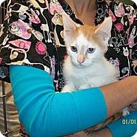 Adopt A Pet :: Baxter - Riverside, RI