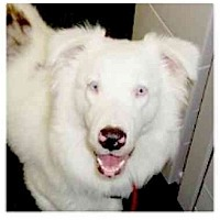 Adopt A Pet :: Franky - Orlando, FL
