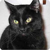 Adopt A Pet :: Onyx - Markham, ON