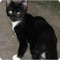 Adopt A Pet :: Bootsie - Greenville, SC