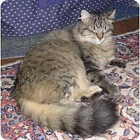 Adopt A Pet :: Fluffy - Portland, ME