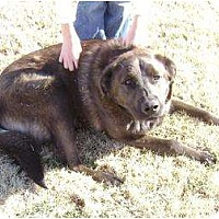 Adopt A Pet :: Brownie - Newcastle, OK