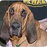 Adopt A Pet :: Winnie - Phoenix, AZ
