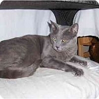Adopt A Pet :: Zeus - Los Angeles, CA