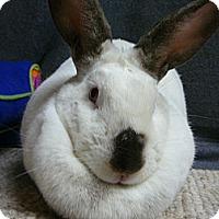 Adopt A Pet :: Fifi - Newport, DE