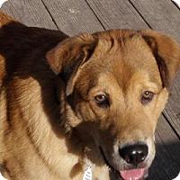 Adopt A Pet :: Chuck - Beachwood, OH