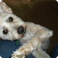 Adopt A Pet :: Patrick - Geneseo, IL
