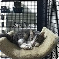 Adopt A Pet :: Henry - 'URGENT' - Hamilton, ON