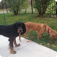 Adopt A Pet :: Clover & Nutmeg 18mo Adopted - Mentor, OH