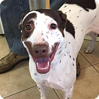 Adopt A Pet :: Smudges - Middletown, NY