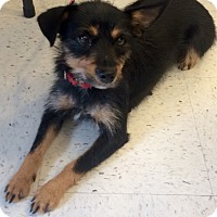 Adopt A Pet :: Truffles in CT - Manchester, CT