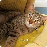 Adopt A Pet :: Birdie - Jackson, NJ