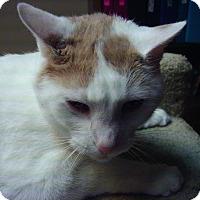 Adopt A Pet :: Romeo - Bridgeton, MO