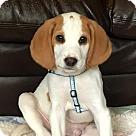 Adopt A Pet :: Rockin' Jagger