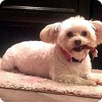 Adopt A Pet :: OLIVIA - Mission Viejo, CA
