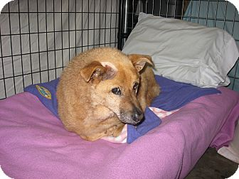 Chow Chow Mix Dog for adoption in Port Clinton, Ohio - TEMPEST